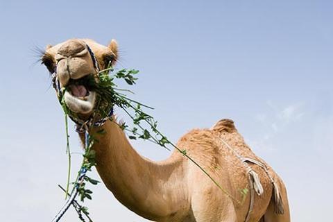 8-730-373.camels.m
